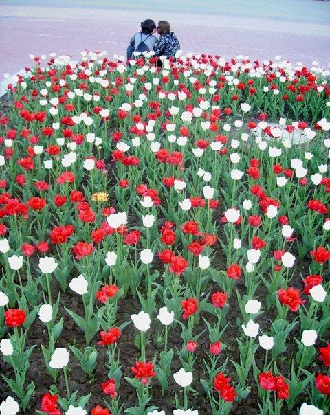 Nemiga,Minsk, tulipes par Julie Novik